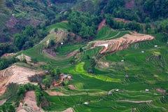 Terrasvormige padievelden in Yuanyang-provincie, Yunnan, China Stock Afbeeldingen