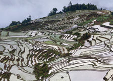 Terrasvormige padievelden in Yuanyang-provincie, Yunnan, China Stock Foto's