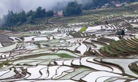 Terrasvormige padievelden in Yuanyang-provincie, Yunnan, China Royalty-vrije Stock Foto