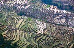 Terrasvormige padievelden in Yuanyang, Yunnan, China Royalty-vrije Stock Afbeeldingen