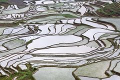 Terrasvormige padievelden in Yuanyang, Yunnan, China Stock Foto's