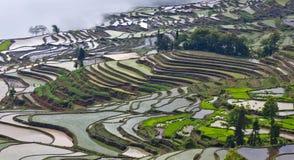 Terrasvormige padievelden in Yuanyang, Yunnan, China Royalty-vrije Stock Afbeelding