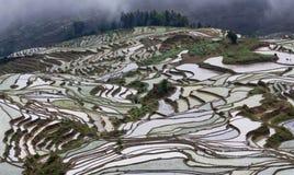 Terrasvormige padievelden in Yuanyang, Yunnan, China Stock Fotografie