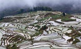 Terrasvormige padievelden in Yunnan, China Stock Foto