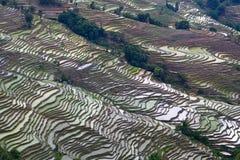 Terrasvormige padievelden in Yunnan, China Royalty-vrije Stock Afbeeldingen