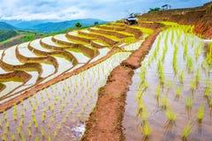 Terrasvormige rijst Royalty-vrije Stock Fotografie