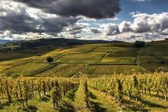 Terrasvormige wijngaarden Royalty-vrije Stock Afbeelding