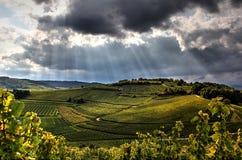 Terrasvormige wijngaarden vóór het onweer Stock Fotografie
