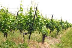 Terrasvormige wijngaarden van Lavaux zwitserland Stock Fotografie