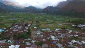 Terraza aérea del arroz de las cantidades en los pueblos de Sembalun almacen de metraje de vídeo