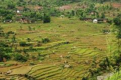 Terraza china de Fubao (6) Fotos de archivo