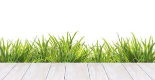 Terraza de los tableros blancos y de la hierba, frontera, aislada Imagen de archivo