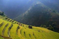 Terraza de oro del arroz en el cang chai, Vietnam de MU Fotografía de archivo libre de regalías