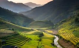 Terraza de oro del arroz en el cang chai, Vietnam de MU Foto de archivo libre de regalías