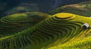 Terraza de oro del arroz en el cang chai, Vietnam de MU Imagen de archivo
