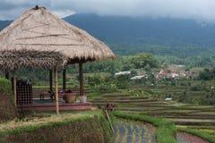 Terraza del arroz. Imagen de archivo libre de regalías