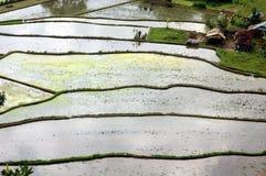 Terraza del arroz Fotos de archivo libres de regalías