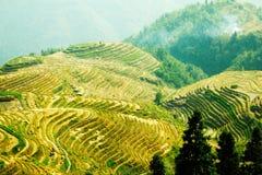 Terraza del arroz Imagen de archivo libre de regalías