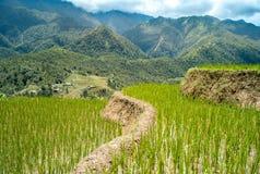 Terraza del arroz Foto de archivo libre de regalías