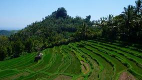 Terraza del arroz de arroz de la ladera Imagenes de archivo