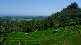 Terraza del arroz de arroz de la ladera Fotos de archivo libres de regalías