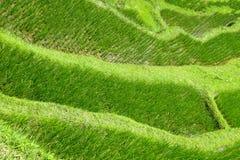 Terraza del arroz de Tegalalang en Ubud, Bali, Indonesia fotos de archivo