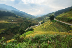 Terraza del arroz en el moutain en Vietnam Imagen de archivo