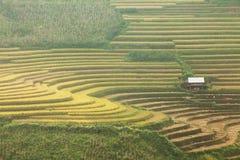 Terraza del arroz en el moutain en Vietnam Fotografía de archivo