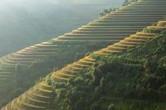 Terraza del arroz en el moutain en Vietnam Foto de archivo libre de regalías