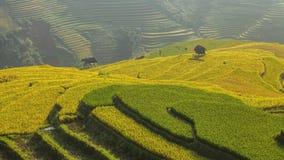 Terraza del arroz en el moutain en Vietnam Foto de archivo