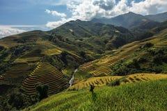 Terraza del arroz en el moutain en Vietnam Fotos de archivo libres de regalías