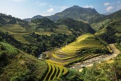 Terraza del arroz en el moutain en Vietnam Fotos de archivo