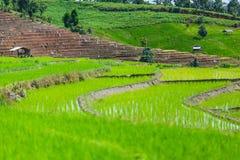 Terraza del arroz en una iluminación nublada de la estación de lluvias imagen de archivo
