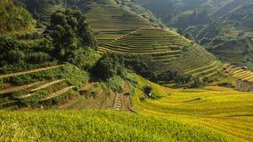 Terraza del arroz en Vietnam Imágenes de archivo libres de regalías