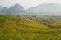 Terraza del arroz en Vietnam Imagen de archivo