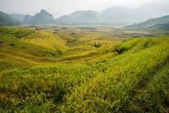 Terraza del arroz en Vietnam Foto de archivo libre de regalías
