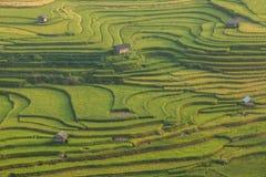 Terraza del arroz en Vietnam Fotos de archivo