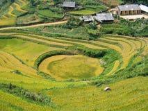 Terraza del arroz, Sapa Fotografía de archivo