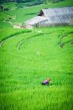 Terraza del paso de progresión del arroz en Vietnam Imagen de archivo libre de regalías