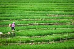 Terraza del paso de progresión del arroz en Vietnam Imagenes de archivo
