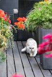 Terraza moderna con el gato y las flores Foto de archivo libre de regalías
