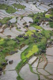 Terraza verde del arroz con agua Sulawesi, Indonesia   Foto de archivo