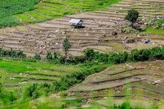 Terraza y montaña del arroz en PA Bong Piang cerca del parque nacional de Inthanon y Mae Chaem, Chiangmai, Tailandia imagen de archivo