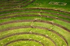 Terrazas agrícolas en Moray, Cusco, Perú Imagen de archivo