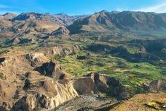 Terrazas caminadas en el barranco de Colca en Perú Fotografía de archivo