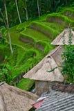 Terrazas de la aldea y del arroz Fotos de archivo libres de regalías