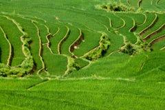 Terrazas de la empanada del arroz Fotografía de archivo libre de regalías