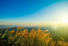 Terrazas de la flor de la hierba en las montañas con puesta del sol Fotografía de archivo libre de regalías
