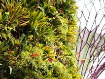 Terrazas de la planta en un Supertree Fotografía de archivo