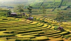 Terrazas de MU Cang Chai Foto de archivo libre de regalías